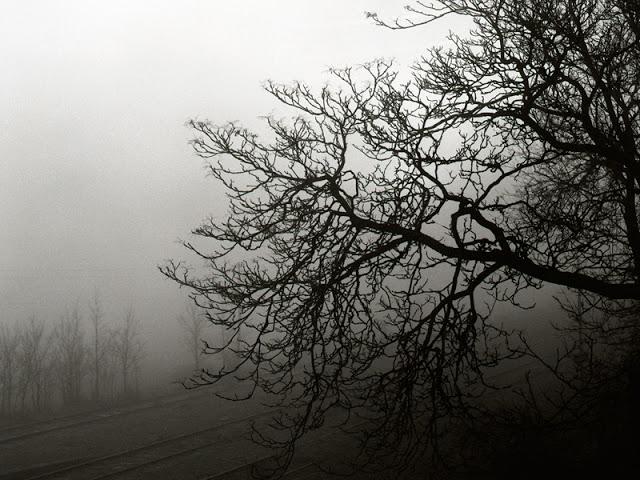 <center>Imagen: <em>Nebbia</em>. Miguel Ángel Blázquez</center>